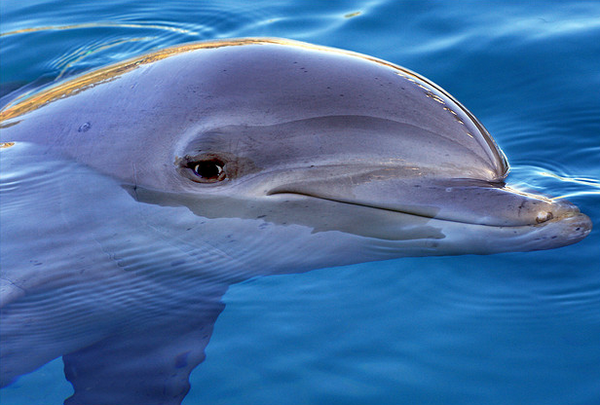 dolph1304